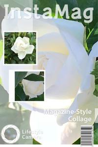 鉢植えのアイスバーグ - mypotteaセンチメンタルな日々with photos5