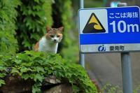 津波避難道路 - 愛にゃんブログ