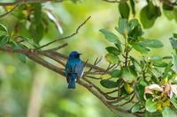飛島で野鳥観察をしてきました。 - ひとり野鳥の会