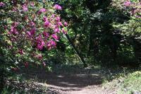 清水公園のツツジ - 四季の色 -Colors of the Four Seasons