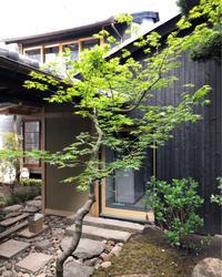 奈良町町家改修計画納屋と中庭 - 国産材・県産材でつくる木の住まいの設計 FRONTdesign  設計blog