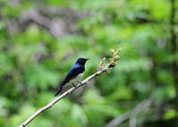 緑が濃くなってきた林! - Weblog : ちー3歩 Ⅱ