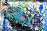 水浴びB.Bの記録(続・4月18日&4月23日) - FUNKY'S BLUE SKY