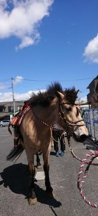 乗馬体験! - ハウジングパーク八戸/センターハウスブログ