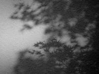 新緑を映す - haze's photos