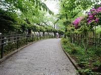 ねむの木の庭~y散歩 - 新 LANILANIな日々