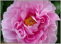 座れば牡丹の花 ‼ - 野鳥の素顔 <野鳥と日々の出来事>