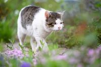 このブログについてー登場する猫・外猫編ー - 猫と夕焼け