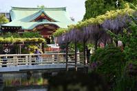 亀戸天神社の藤まつりで、初撮り! - kenのデジカメライフ