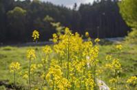 畑の時間 - 良え畝のブログ