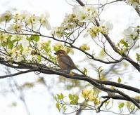 公園の野鳥♪ - ヒデッチのフォトブログ ☆彡