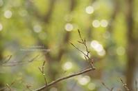 新緑と妖精たち - It's only photo 2