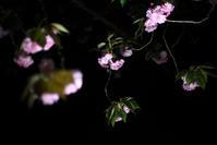 夜を彩る - Today's one photograph