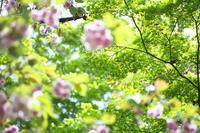 新緑の中のピンク - Today's one photograph