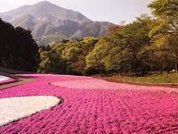 秩父の芝桜 - その日・その日