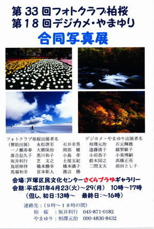 2019年(平成31年)春の写真展 柏桜と合同写真展 さくらプラザギャラリーA - 写真展をやろ~