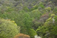 萌え出ずる春~祝 令和 ~ - 風の彩り-2