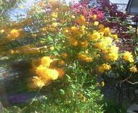 春の庭 - おじさん秀之進の山中リタイヤ生活