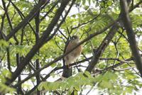 令和初の鳥撮り三昧 - 私の鳥撮り散歩
