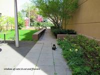 花と猫 - Wisdom of Cats