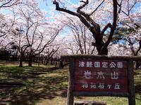 桜林公園の桜(弘前市)*2019.05.02 - 津軽ジェンヌのcafe日記