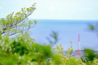 # 海が見える公園、漁港、池 - Green+Pink