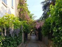 5月1日すずらんと藤の花で迎えた 令和@パリ - keiko's paris journal <パリ通信 - KSL>
