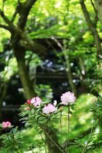 新緑の季#2 - Hibi*Photo ~Second season~