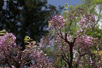 風に吹かれる簪のように - 京都ときどき沖縄ところにより気まぐれ
