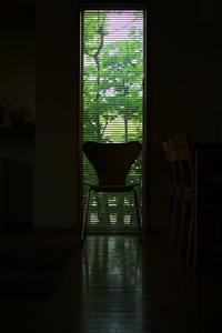 プチ自慢 - ブナの写真日記