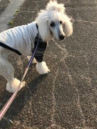 のんびりお散歩 - gin~tetsu~nosuke