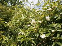 今年はガッテン農法で栽培してみる - 自然農☆☆☆菜園日記
