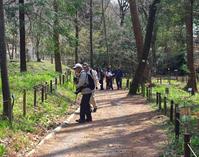 花と山野草/多摩森林科学園の春-1 - 八王子見て歩記