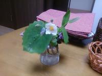 庭の小さな草花を - ★ありのままのきらきら★