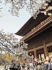 2019京都桜ツアー<南禅寺~哲学の道> - y's 通信 ~季節を彩る風物詩~
