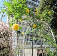5月のきれいな花 - のんびり街さんぽ