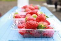イチゴは最強 - 相模原・町田エリアの写真サークル「なちゅフォト」ブログ!