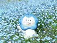 大阪まいしまシーサイドパーク*ネモフィラ祭り* - 小さな幸せ*