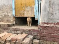 2019 GW北京☆3 村の動物たち - おはけねこ 外国探訪