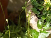 花咲く季節 - hibariの巣