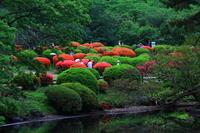 新緑の新宿御苑を散歩 - お散歩写真     O-edo line