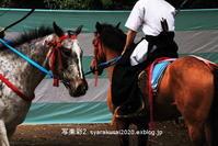 下鴨神社に行く5月-6 - 写楽彩2