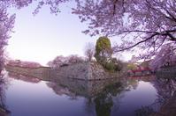 早朝の桜 in 姫路城(2019/4/13)其の② - 南の気ままな写真日記
