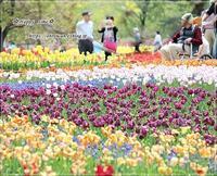 GWお出かけ日記・満開のチューリップあづみの公園♪ - ☆Happy time☆