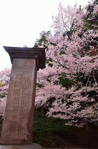 会津磐梯桜の宴 - 風の香に誘われて 風景のふぉと缶