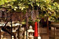 添御縣坐神社 - 奈良・桜井の歴史と社会