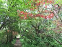 2021年05月 - 神奈川徒歩々旅