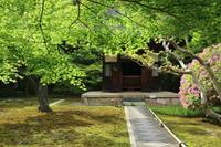 北鎌倉長寿寺の青もみじ - 木洩れ日 青葉 photo散歩