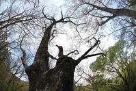 矢板栃木県民の森~野鳥たちに癒される~ - 日々の贈り物(私の宇都宮生活)