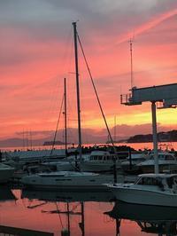 なかなか見られないピンク色のヨットハーバー - パームツリー越しにgood morning        アロマであなたの今に寄り添うブログ